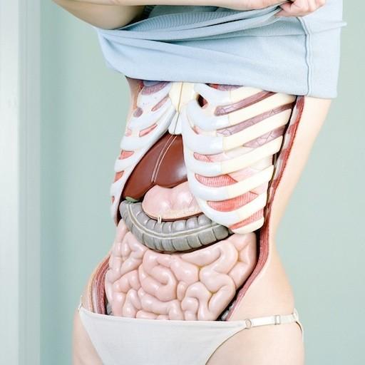ženska anatomija